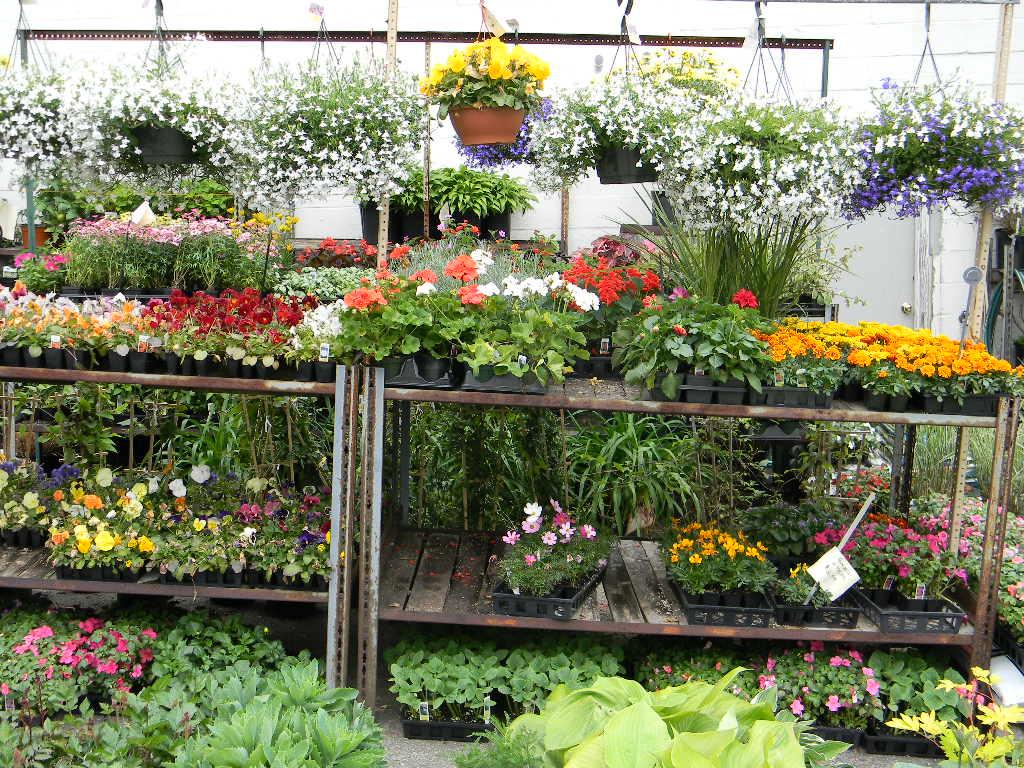 Engledow Cuidado de flores, árboles y arbustos | Indianapolis Landscapers